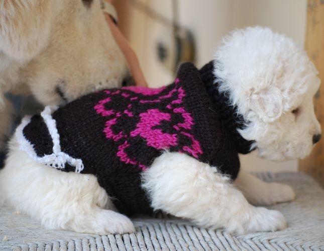 8 best Bekleidung für Katzen und Hunde images on Pinterest | Hund ...