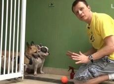 Ensine seu cão a não ultrapassar um limite de espaço