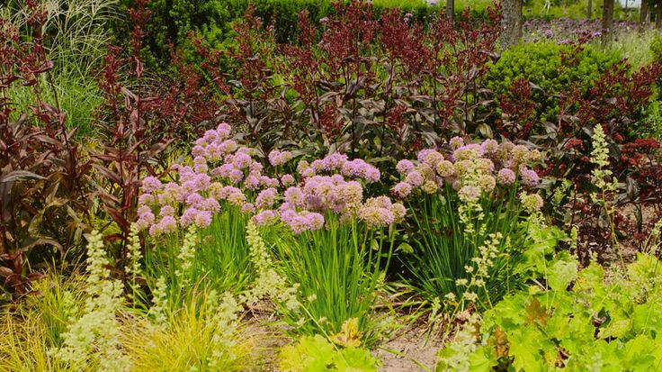 Brighten up sheltered spots in your landscape with these easy-to-grow shade plants that come back year after year.