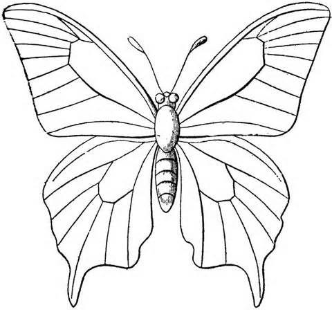 Best Butterflies Images On   Butterflies Butterfly