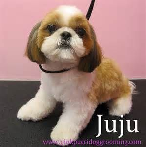 shih tzu grooming styles pictures haircuts - Yahoo Image Search Results