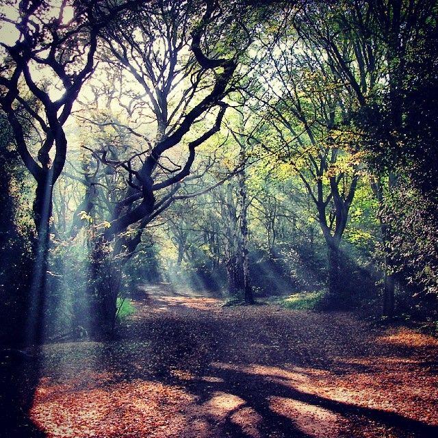 Sun breaking through the forest! #Redbridge #essex  Follow us for more nature snapshots of Redbridge! http://instagram.com/do_morered