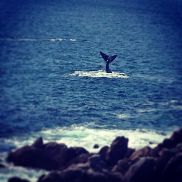 Your #Grootbos Moments [Week 41] - Follow_Colours #Whales #WhaleWatching #WalkerBay http://www.grootbos.com/en/blog/travel/your-grootbos-moments/week-41