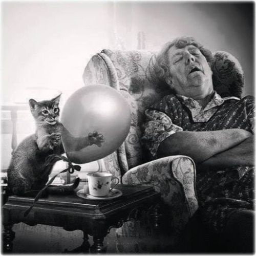 do you wonder what this gal will say when the cat pops the balloon?
