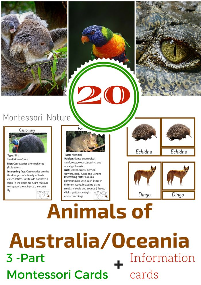 Montessori Nature: 20 ANIMALS OF AUSTRALIA / OCEANIA MONTESSORI 3 PART AND INFORMATION CARDS