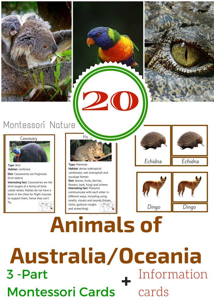 Montessori Nature: 20 ANIMALS OF AUSTRALIA / OCEANIA MONTESSORI 3 PART AND…