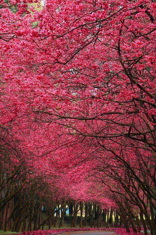 Roadside flowering trees