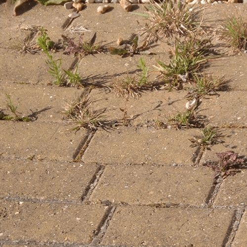 how to get rid of weeds in pavers