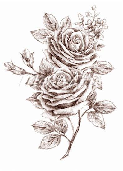 rose outline - Corrie Rose