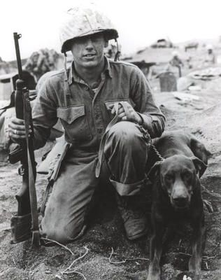 war dogs | World War 2 Photos > US Marines > Iwo Jima war dog