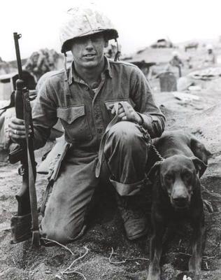 war dogs | World War 2 Photos > US Marines > Iwo Jima war dog
