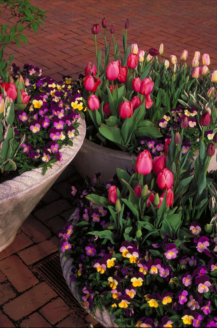 Spring Flower Containers at Longwood Gardens