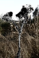 """""""Undergrowth"""" smashbrainzero deviantART gallery"""