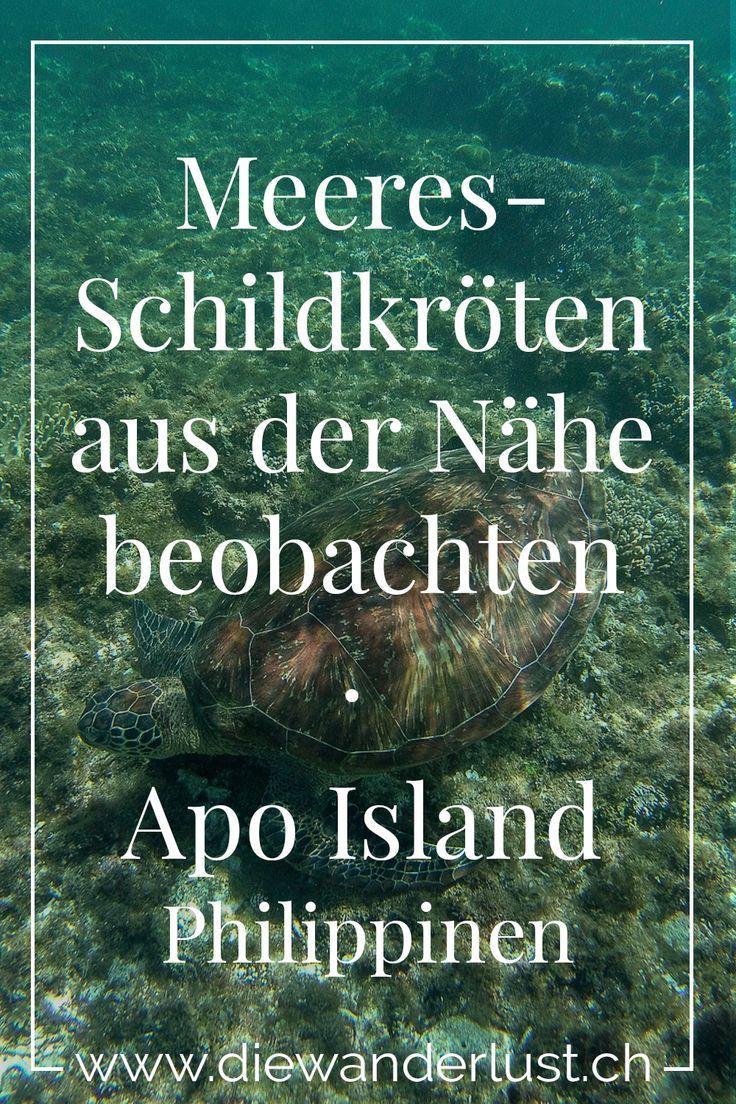 Apo Island Tipps Furs Schnorcheln Und Tauchen Philippinen Tauchen Philippinen Reisetipps