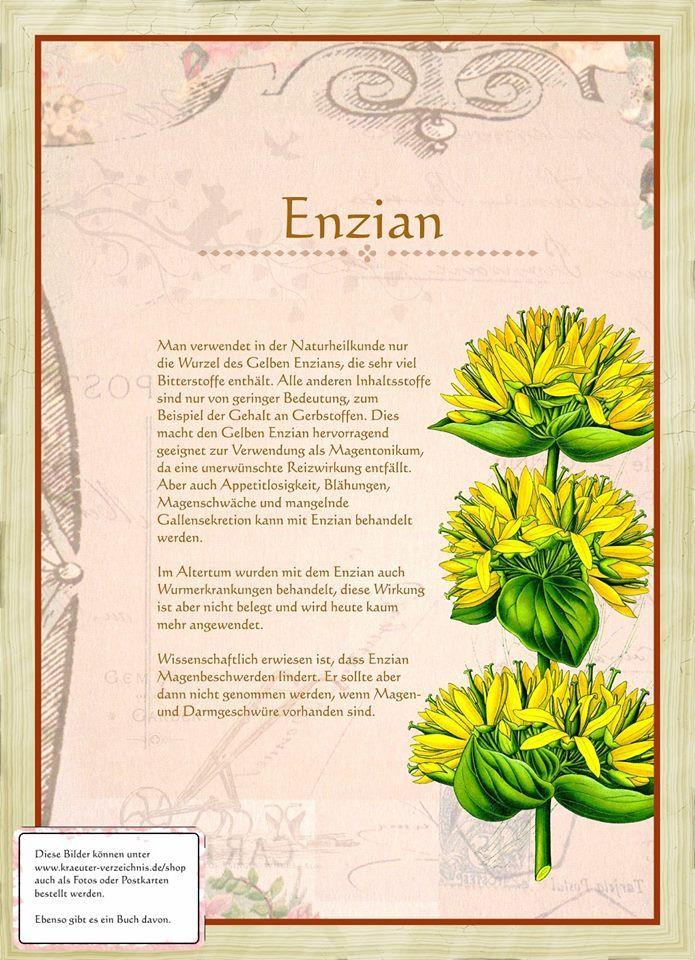 Enzian http://www.kraeuter-verzeichnis.de/