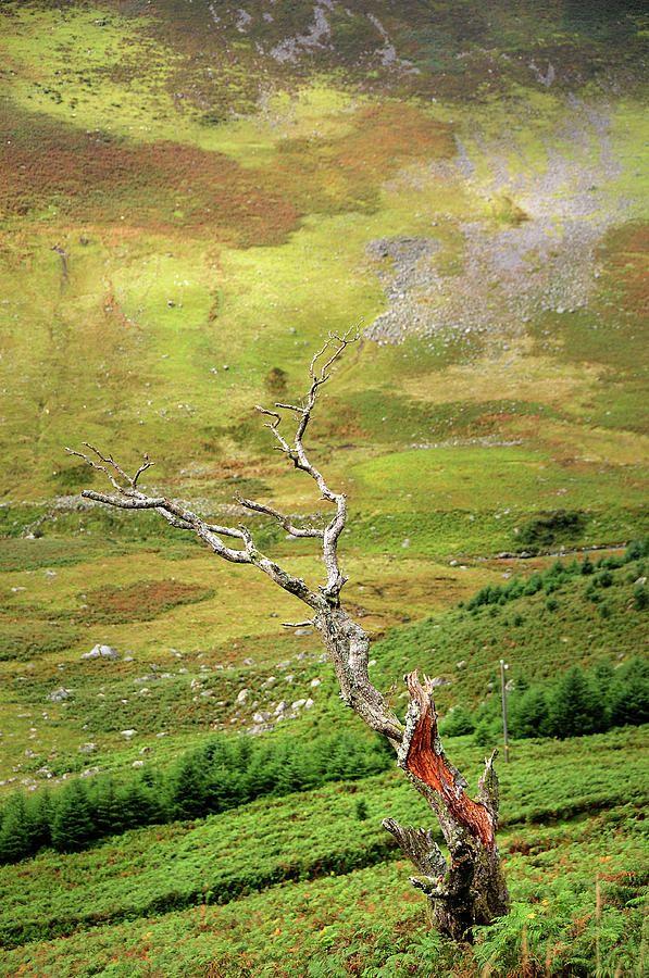 Dry Tree. Wicklow Hills. Ireland by Jenny Rainbow