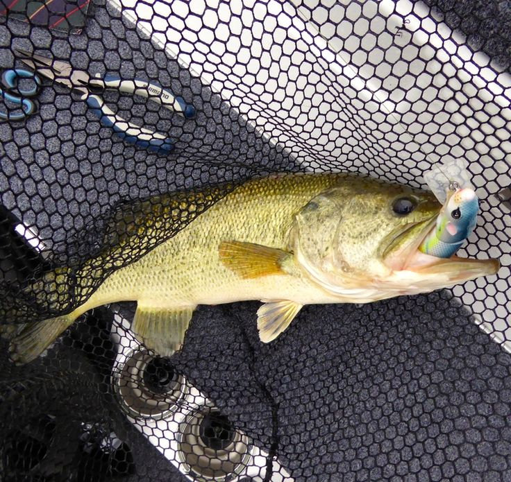 61 best images about 2014 icast on pinterest fishing for Deep water bass fishing