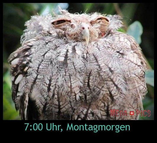 7:00 Uhr, Montagmorgen - www.MegaPics.ch. Lustige Bilder, witzige Fotos, fun Pics, fail Videos.