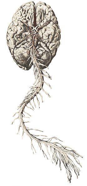 Médula espinal y encéfalo