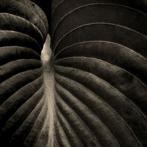 a leaf - by olli kekäläinen