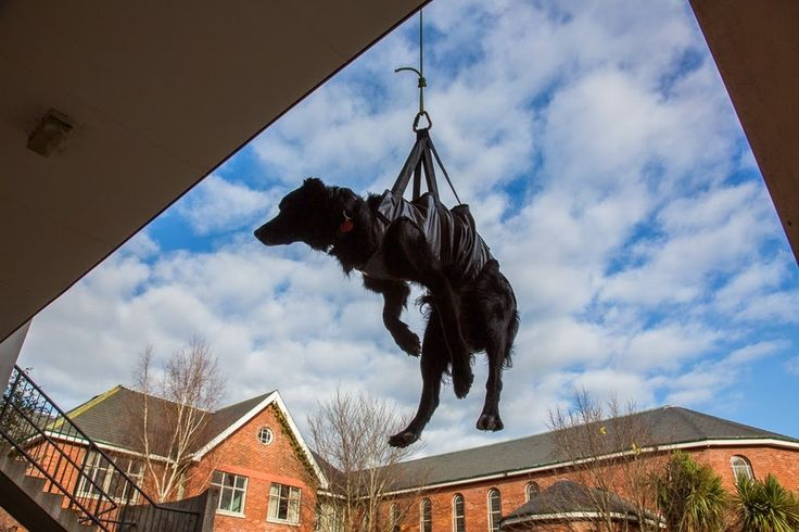 An urban search-and-rescue dog from Christchurch, New Zealand, getting a lift.  | Meet Some Of The Hardest Working Dogs In The World