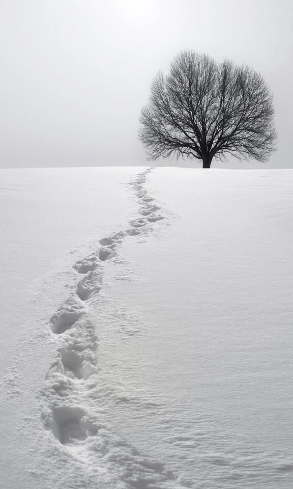 reminds me of footprints in the sand... only in the snow with a breathtakingly beautiful tree... The Tree of Life... on the horizon!