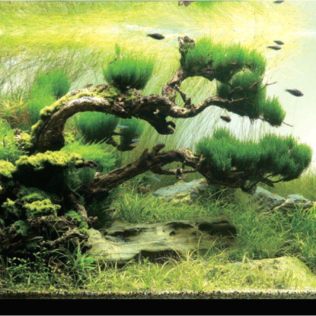 Under Water Bonsai - Aqua Scape
