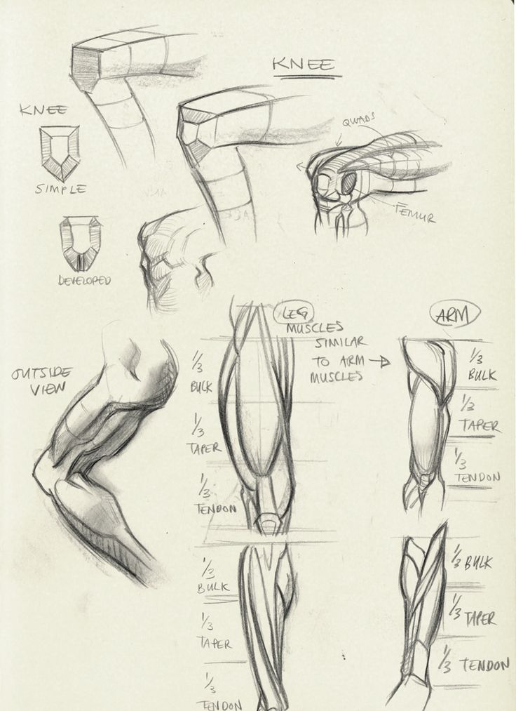 http://tulptorials.blogspot.nl/2014/04/anatomy.html ★ || CHARACTER DESIGN REFERENCES | キャラクターデザイン  • Find more artworks at https://www.facebook.com/CharacterDesignReferences  http://www.pinterest.com/characterdesigh and learn how to draw: #concept #art #animation #anime #comics || ★