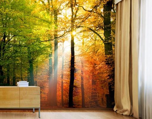 forest photo mural wallpaper