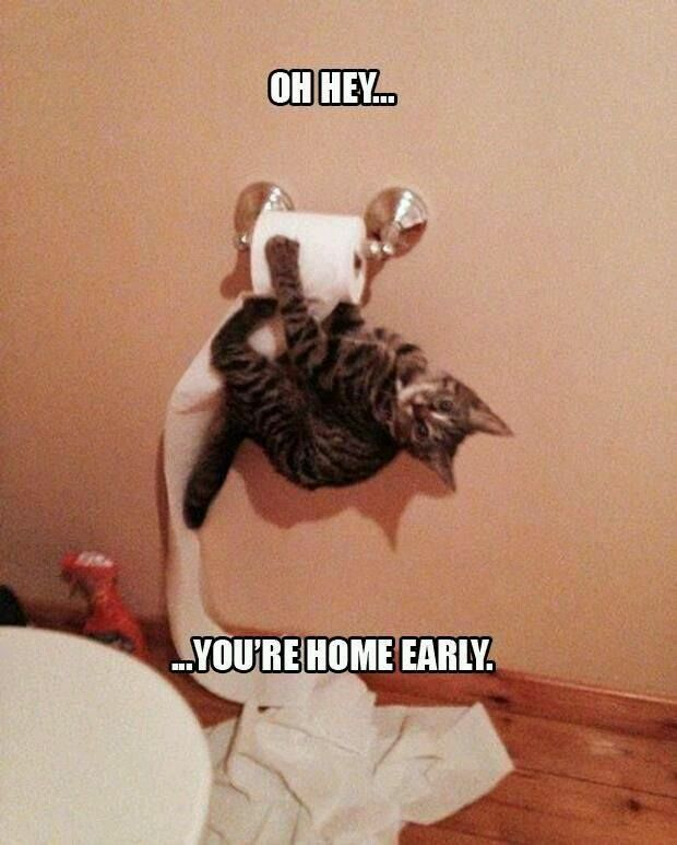 Oh Hey You're Home Early cute memes animals cat cats adorable animal kittens pets kitten funny pictures funny animals funny cats