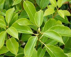 Quer um repelente natural? Veja algumas plantas que afastam insetos e que você pode ter em casa!