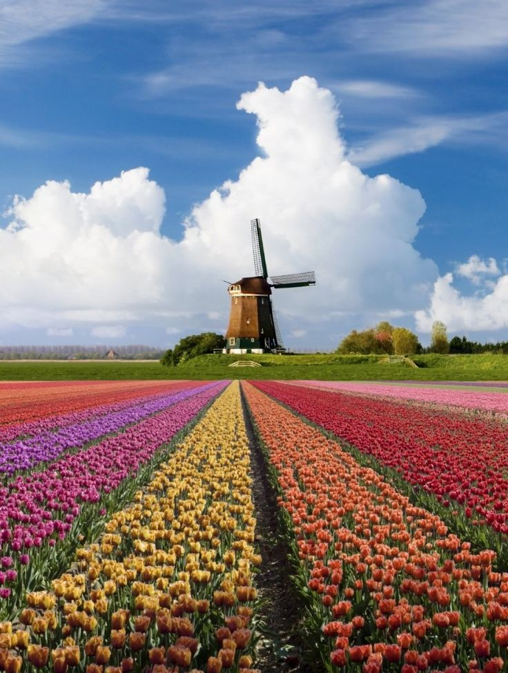 14 Reasons to visit the Netherlands in