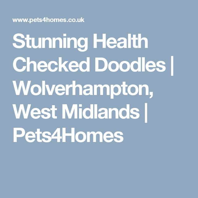 Stunning Health Checked Doodles | Wolverhampton, West Midlands | Pets4Homes