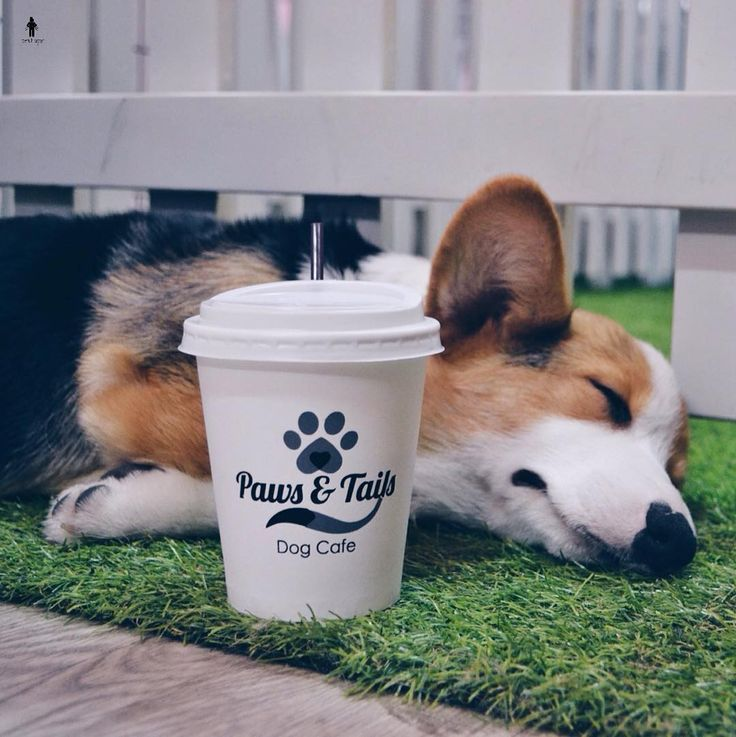 Paws and Tails Let's say hello to this super lazy dog Who's love dog? You must visit paws and tails cafe they've many kind of cake drinks and cute puppies too. You can play and enjoyed your meal together if you have a dog you can bring your dog too Have a great weekend guys! . . Price: Greentea Latte: Rp. 30.000 . . Ruko Graha Boulevard Blok B No. 21 Jl. Boulevard Gading Serpong Serpong Tangerang . #perutlaparr #greentealatte #greentea #latte #dog #dogcafe #corgi #puppy #happyfriday #friday…