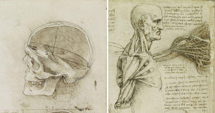 Leonardo da Vinci fue una gran figura del movimiento artístico del renacimiento, quien se formó en Florencia como artista, pero que cuando se trasladó a Milán desarrolló un gran interés por diversos temas científicos, volviéndose en una de las personas más polifacéticas de su época al abordar, investigar y trabajar en una gran variedad de áreas que sorprendieron a propios y extraños, desde la arquitectura, la ingeniería, el urbanismo y la paleontología entre otros.