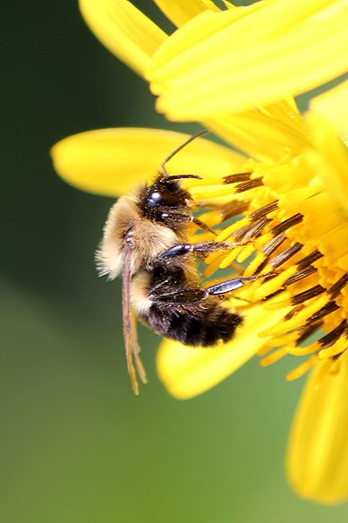 Why Bee Extinction Means End of Humanity? http://www.scienceabc.com/nature/bee-extinction-means-end-humanity.html