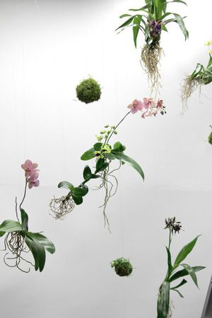 Floating orchids, Ingrid Starnes fashion show, New Zealand Designer: Xanthe White