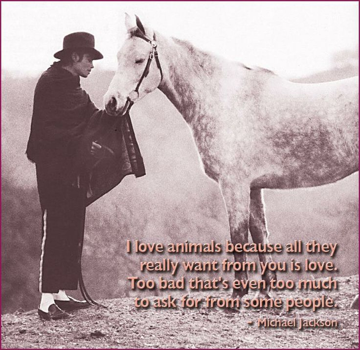 ♥ Michael Jackson ♥                                                                                                                                                                                 More