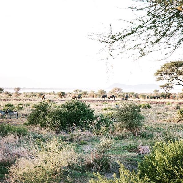 That time I was in paradise. If you zoom in you'll find Elephants and Zebras enjoying the sunset.  Tarangarie NP Tanzania Photo by Dani Knox Photos