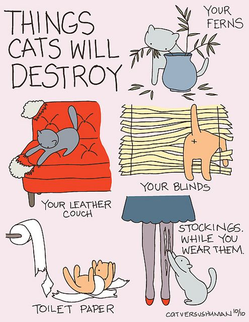 Things cats will destroy...No delaying the inevitable here. So much truth, but you know what? WORTH IT.