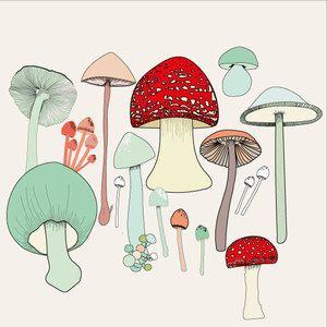 Mushrooms-and-toadstools.jpg