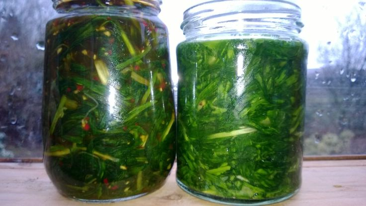 How to ferment wild greens - Kimichi style wild leek (L) and lacto-fermented wild garlic (R)