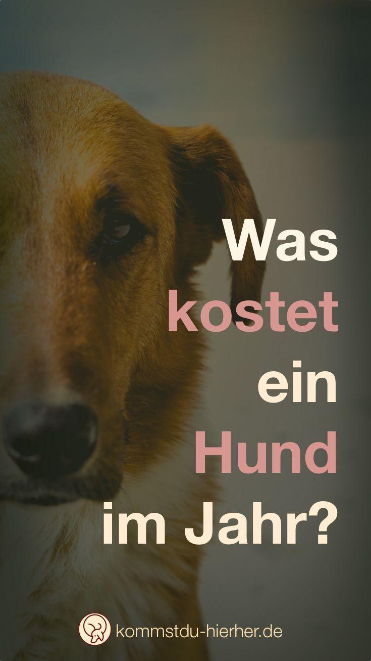 Was kostet ein Hund Was kostet ein hund, Hunde, Tierheim