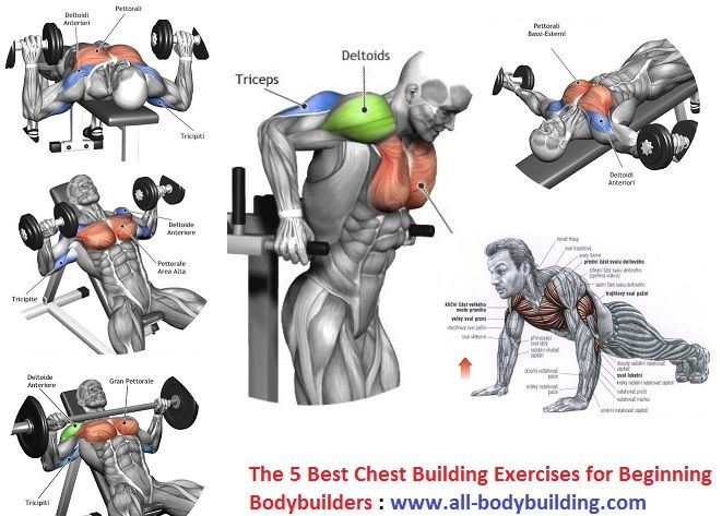 Best Chest Building Exercises