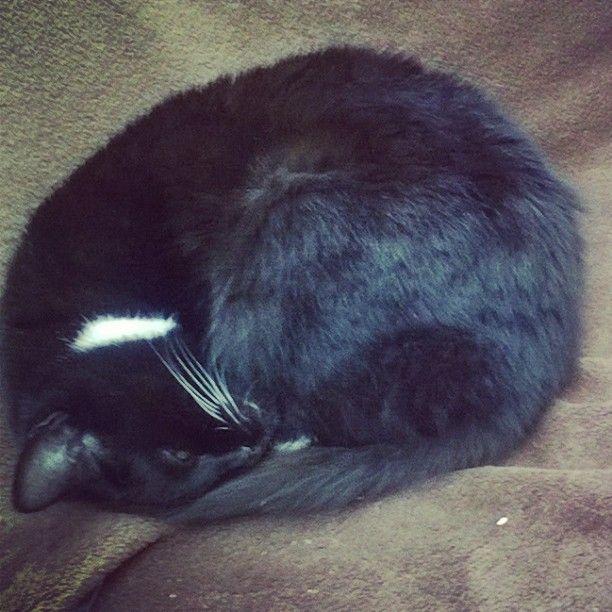 Tiny Tim #cats #catsofinstagram