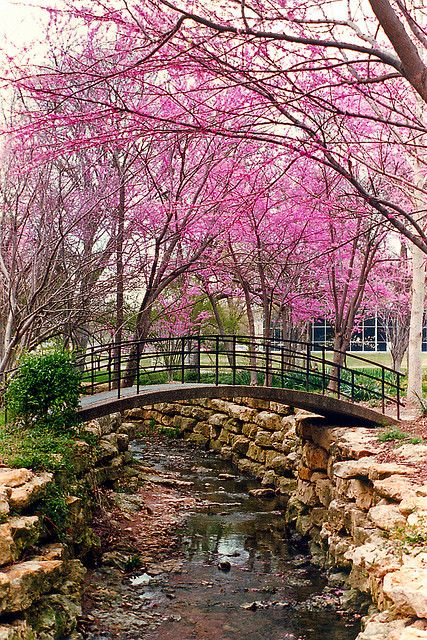 Ft. Worth Botanical Gardens......This is just an absolutely gorgeous public garden. Takes several days to see it all!