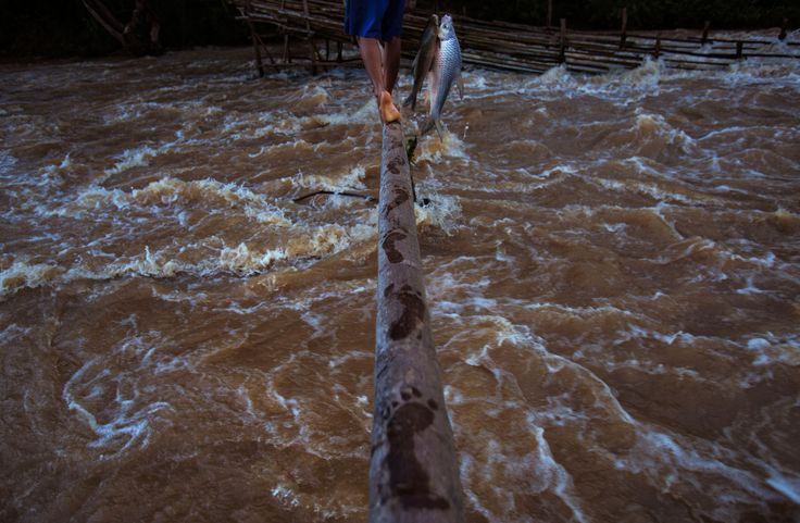 Picture of a Laotian fisherman A fisherman in Laos leaves wet footprints on a long pole, used to connect giant fishing weirs over dangerously fast Mekong River rapids.