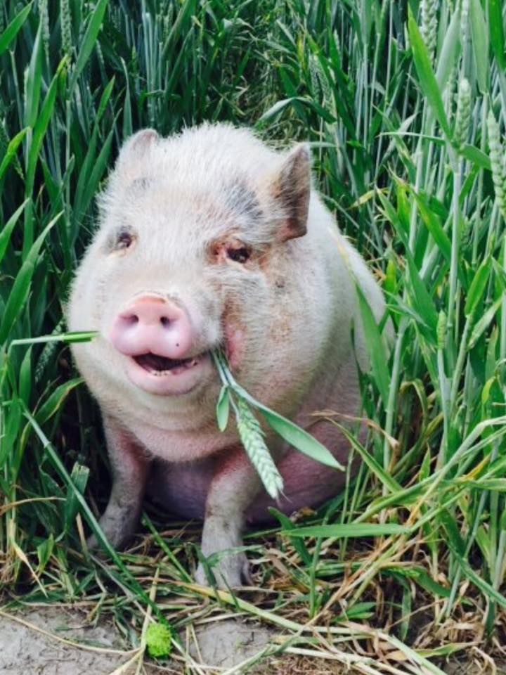 430 Best Pigs May Not Fly But Images On Pinterest