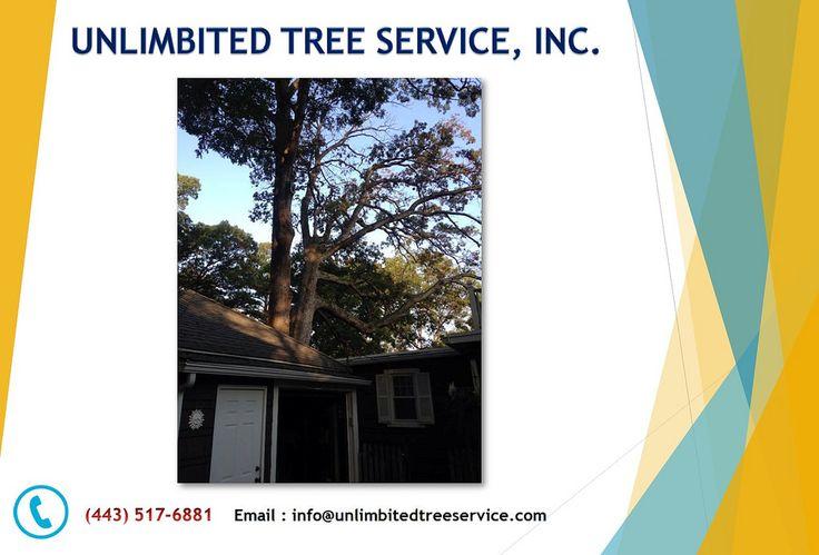 https://flic.kr/p/WQKaq8   Columbia Tree Removal, Tree Trimming, Tree Pruning Service   Follow Us : www.unlimbitedtreeservice.com/   Follow Us : www.facebook.com/unlimbitedtreeservice   Follow Us : twitter.com/unlimbitedtree   Follow Us : followus.com/unlimbitedtreeservice   Follow Us : www.youtube.com/watch?v=gR1KlyN4o_0