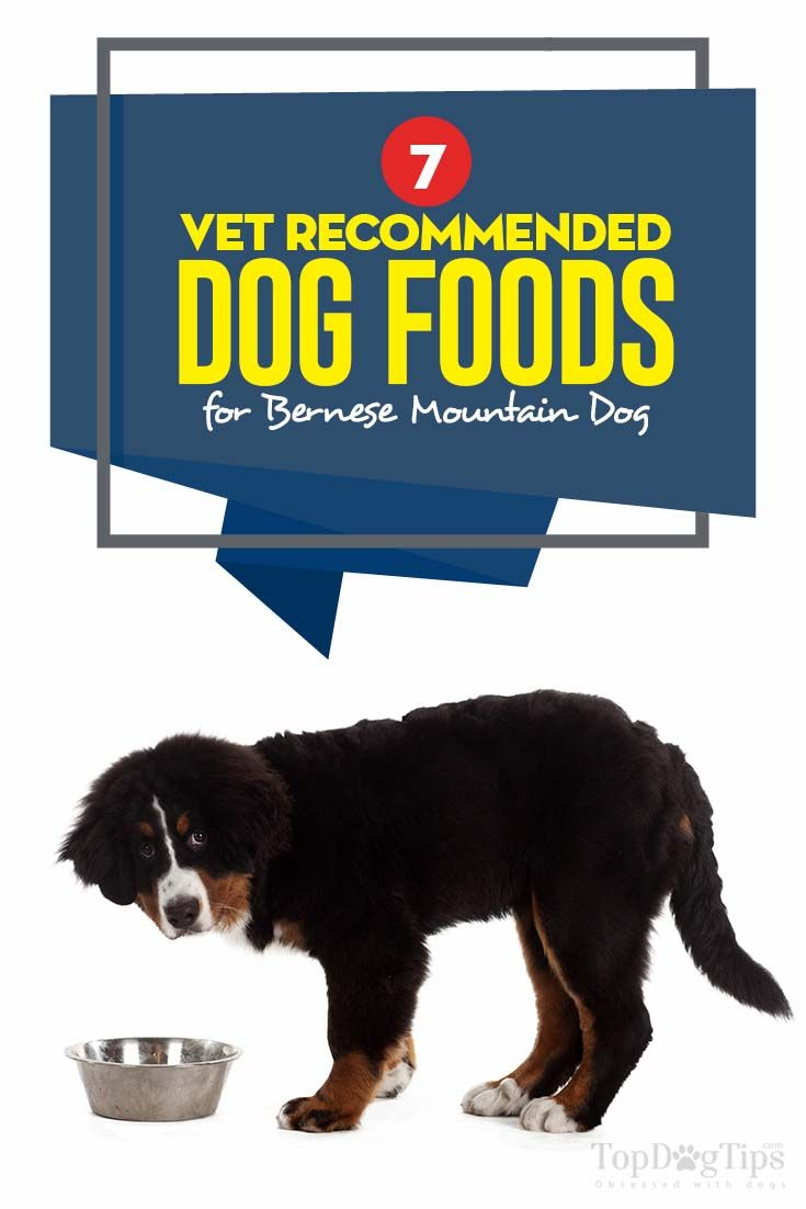 7 Vet Recommended Foods For Bernese Mountain Dog Bernese